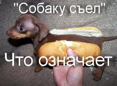 что значит собаку съел