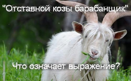 отставной козы барабанщик что значит