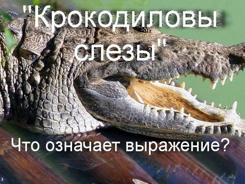 крокодиловы слезы что значит
