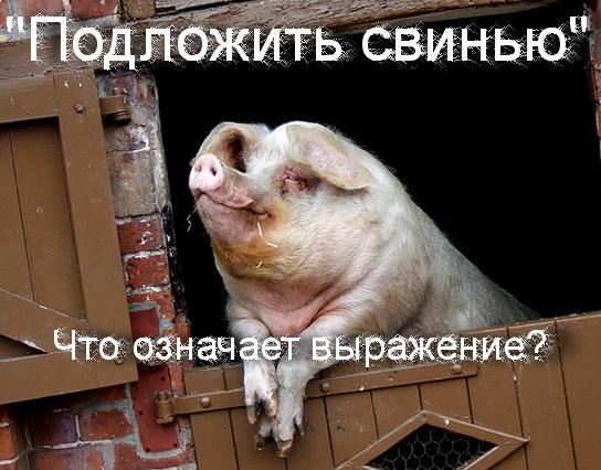 подложить свинью что значит