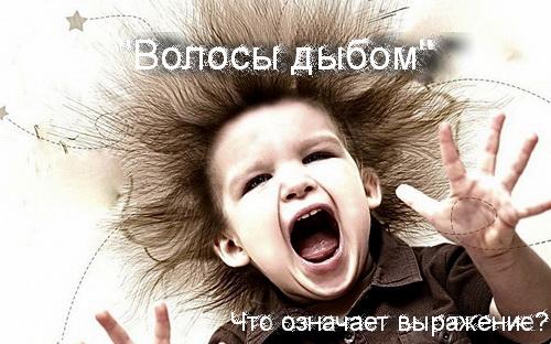 волосы дыбом что значит выражение