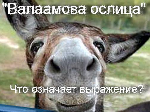 валаамова ослица кто это
