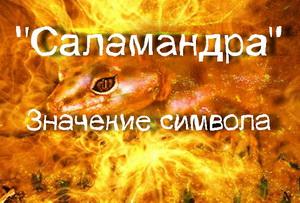 саламандра значение символа